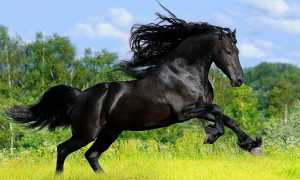 Гайд по лошадям в Black Desert Mobile